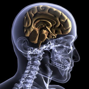 brain-stem-300x300